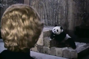 Pat Nixon looking over one of the two panda bears given to the U.S. as a gift from China. (US-China Institute)