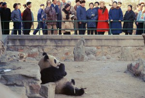 Pat Nixon takes to the panda bear at the Peking Zoo. (RNPL)